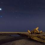 Driftwood Under Stars