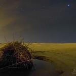 Palmetto Tree Root Under Stars