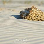 Sponge In The Sand 2